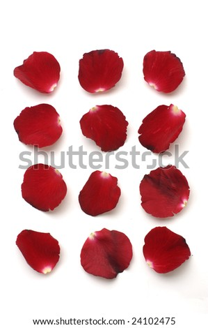 Collection of red petal