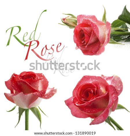 Collection of Red roses isolated on white background, closeup - stock photo