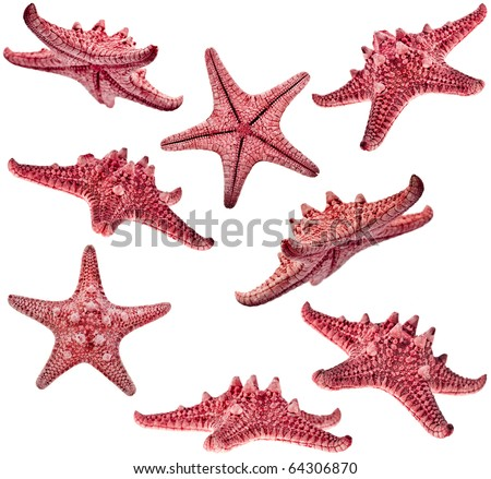 collection of red sea star starfish family close up macro detail isolated - stock photo