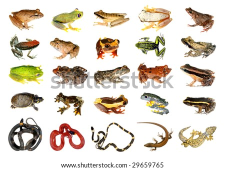 Collection of reptiles and amphibians from the Amazon rainforest - stock photo
