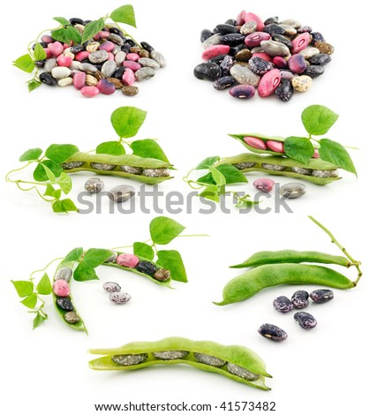 Collection of Ripe Haricot Beans with Seed Isolated on White Background - stock photo