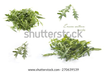 Collection of rucola on white - stock photo