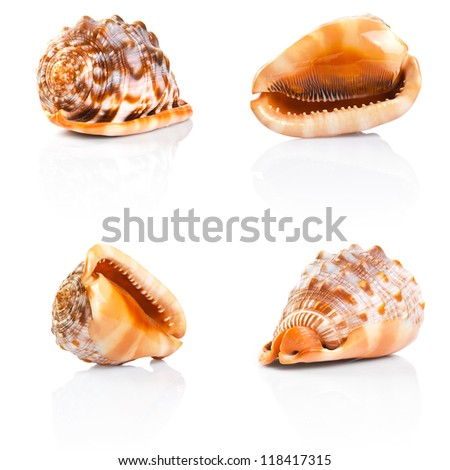 collection of sea shell on a white background - stock photo