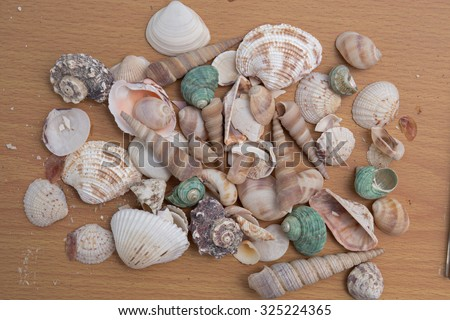 Collection of  sea shell on wood background.