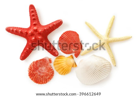 Collection of sea shells and stars in closeup - stock photo