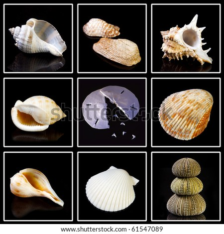 Collection of Sea shells and things found on the beach on black background. Ready for easy removal for your next project. Thank you for looking. - stock photo