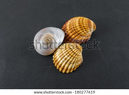 collection of sea shells on a black background