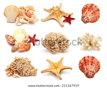 Collection of sea stars, shells and coral isolated on white background - stock photo