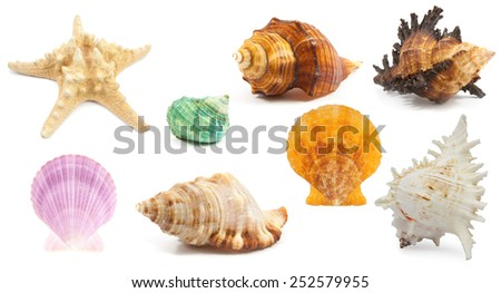 collection of Seashell in close-up isolated on a white background - stock photo