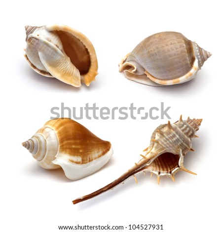 collection of  seashells on white background - stock photo