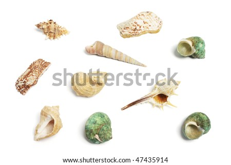 Collection of Seashells on White Background