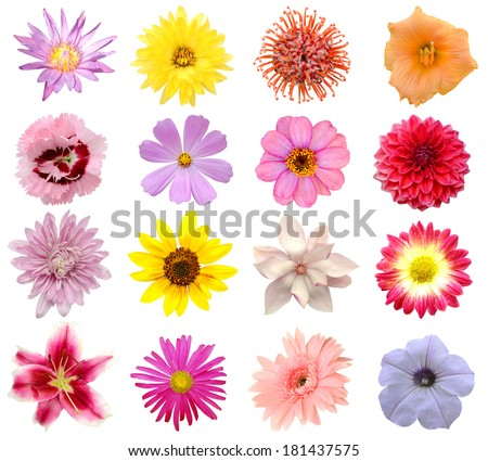 Collection of 16 seasonal open flowers - stock photo