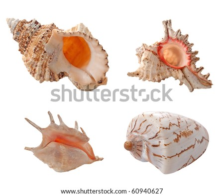 Collection of shells isolated on white background. - stock photo