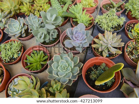 Collection of small cactus in a pot - stock photo