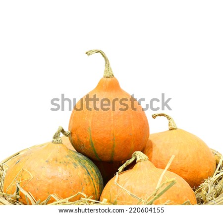 Collection of Small Pumpkins, Seasonal Pumpkin Background - stock photo