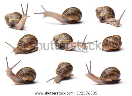 Collection of snails isolated on white background - stock photo