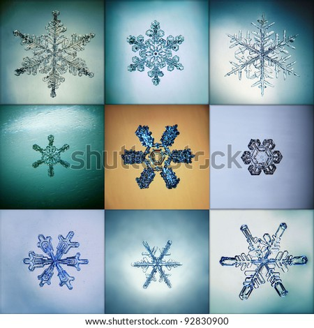 Collection of snowflakes - stock photo