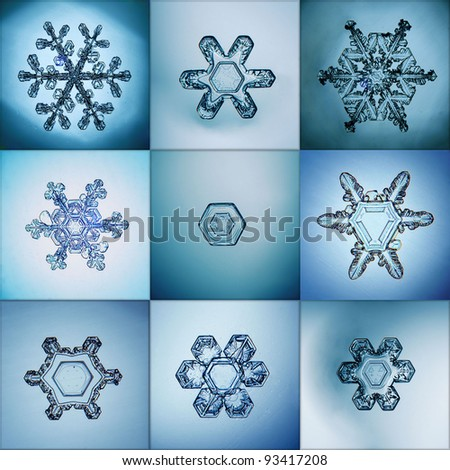 Collection of snowflakes natural macro - stock photo