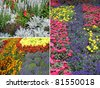 Collection of spring flowers and plants - stock photo