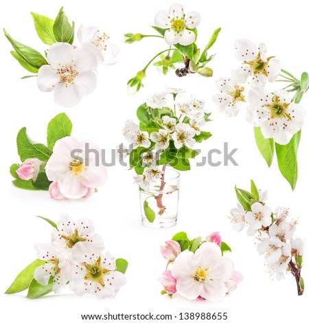 Collection of spring flowers of fruit trees isolated on white background - stock photo