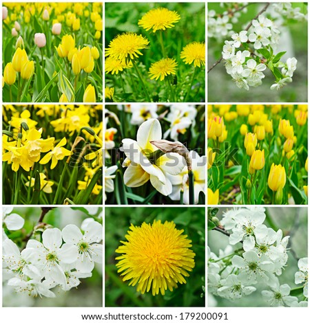 Collection of spring flowers with green leaves, natural background - stock photo