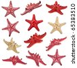 collection of starfish family close up macro detail isolated - stock photo