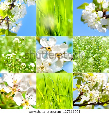 Collection of summer and spring wallpapers or backgrounds.  Dandelions, flowers, grass and summer sun