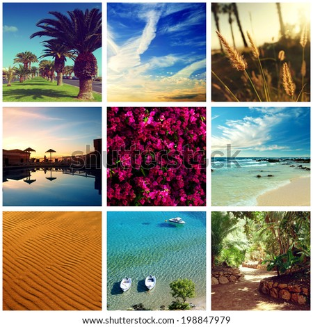 Collection of summer landscapes and closeup. Beautiful flowers, beach, blue sky, tropical palms. - stock photo