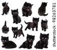 Collection of the same black little kitten on white background - stock photo