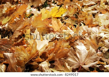 Collection of the textures (Autumn foliage)
