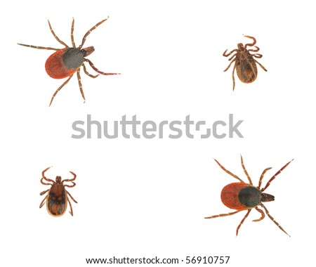 Collection of ticks isolated on white - stock photo