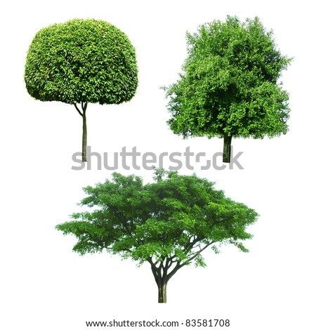 collection of Trees isolated - stock photo