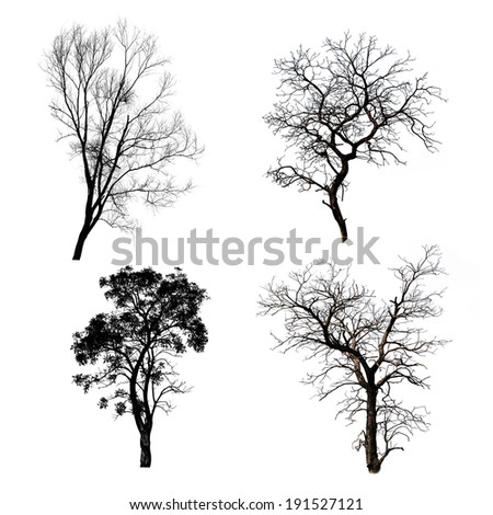 Collection of trees silhouette
