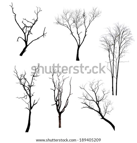 Collection of trees silhouettes - stock photo