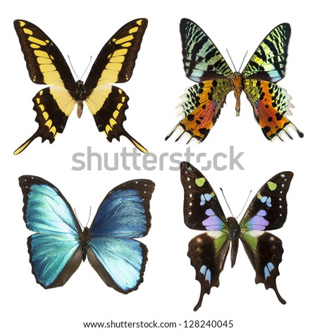 collection of tropical butterflies isolated on white - stock photo