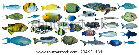 collection of tropical fishes on white background - stock photo