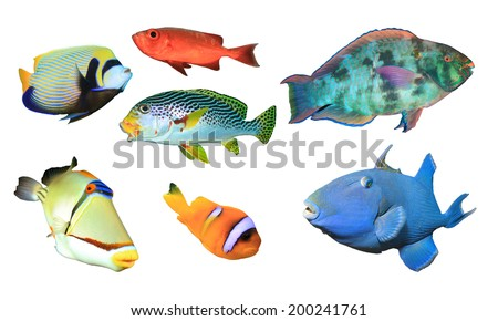 Collection of Tropical Reef Fish isolated on white background - stock photo