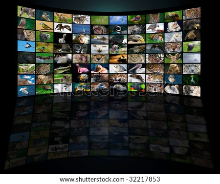 collection of various animals in big panel tv screen