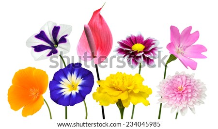 Collection of Various Colorful Flowers with Green Stick Isolated on White Background. Vibrant Red, Blue, Pink, Purple, Yellow White, and Orange Colors. Bunch of dahlia, marigold daisy, and wildflowers - stock photo