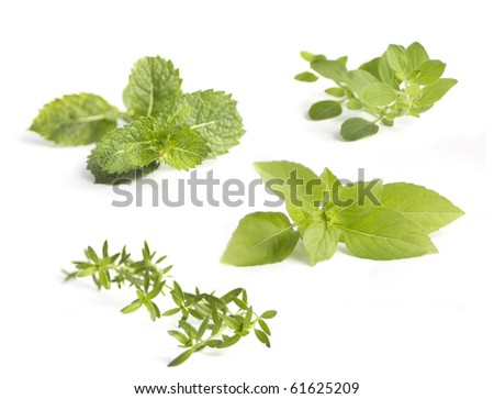 Collection of various herbs, isolated on white - stock photo