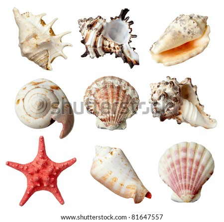 collection of  various seashells on  white background. each one is shot separately - stock photo