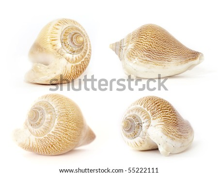 Collection of various view of the stripy seashell