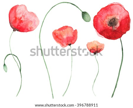 Collection of  watercolor poppy flowers. Set of beautiful watercolor poppy on white background. Perfect for wedding invitations, greeting cards, quotes, blogs, posters and DIY. - stock photo