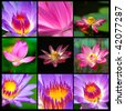 Collection of waterlilies flowers - stock photo