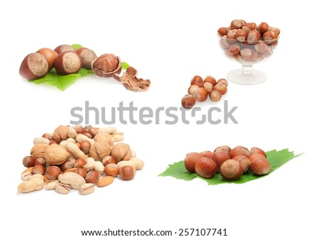 collection of whole hazenuts with kernel and shell on green leaves - stock photo