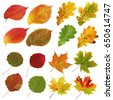Collection of yellow and red autumn leaves, aspen and elm, oak and maple. Isolated on white background.