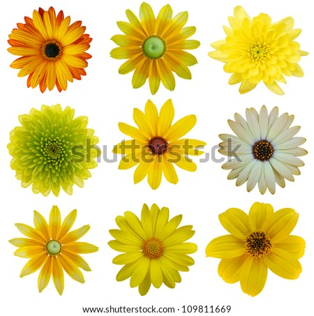 Collection of Yellow Flowers Isolated on White. Various set of Dahlia, Dandelion, Daisy, blackeyed susan - stock photo
