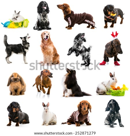 collection photos of cute dogs and rabbits on a white background - stock photo