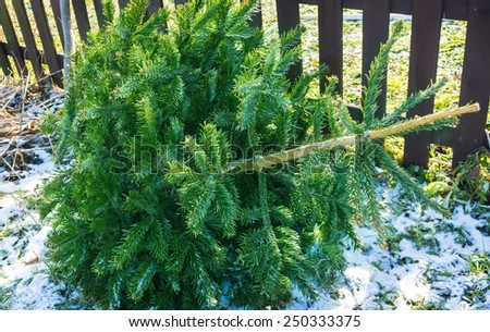 Collection point for Christmas trees - stock photo