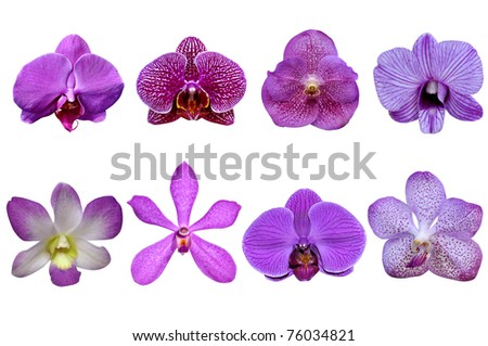Collection Purple Orchid - stock photo